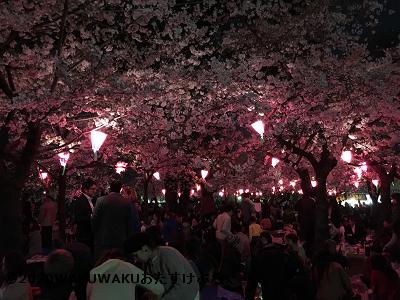 鶴舞公園のライトアップ