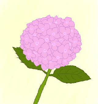 ピンクのアジサイのイラスト