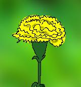 黄色いカーネーションのイラスト