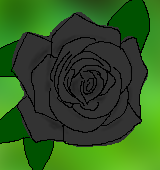 黒いバラのイラスト