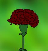 濃い赤色のカーネーションのイラスト