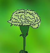 緑色のカーネーションのイラスト