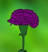 紫色のカーネーションのイラスト