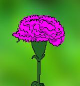 ピンク色のカーネーションのイラスト