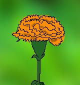 オレンジ色のカーネーションのイラスト