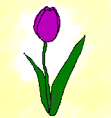 紫のチューリップのイラスト