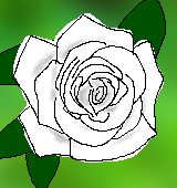白いバラのイラスト
