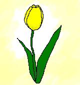黄色いチューリップのイラスト