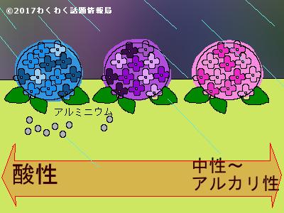 アジサイの色と土壌酸度のイラスト