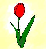赤いチューリップのイラスト