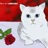バラの花言葉は色や本数でこんなに違う!贈るときには注意が必要だよ