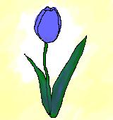 青いチューリップのイラスト