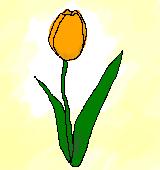 orangeのチューリップのイラスト