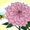 ダリアの花言葉には怖い意味もある!贈るときに注意すべきコトとは?