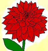赤いダリアのイラスト