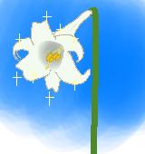 白ユリのイラスト