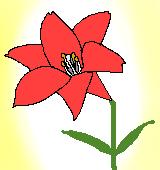 赤いユリのイラスト