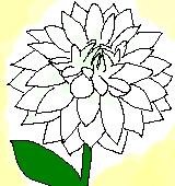 白いダリアのイラスト