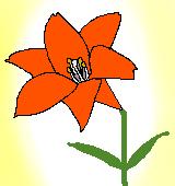 オレンジのユリのイラスト