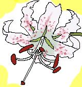 カノコユリのイラスト