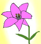 ピンクのユリのイラスト