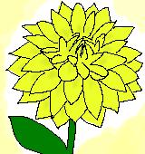 黄色いダリアのイラスト