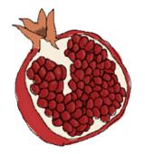 ザクロの果実のイラスト
