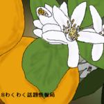 オレンジの花言葉は花嫁にピッタリ!素敵なメッセージがずらり