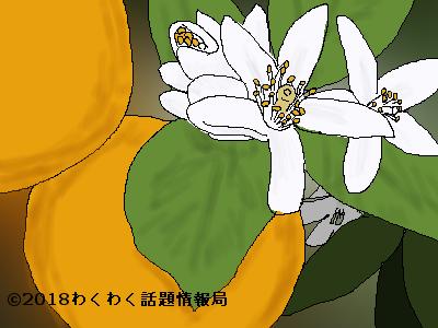 オレンジのイラスト