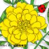 マリーゴールドの花言葉が怖いゾ~!その由来や意味を解説します