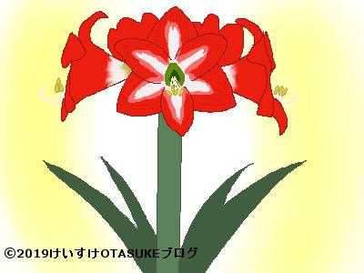 アマリリス花言葉の由来イラスト