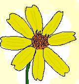 レモンマリーゴールドのイラスト
