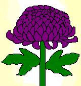 紫のキクのイラスト