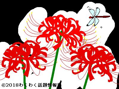 ヒガンバナのイラスト