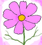 ピンクのコスモスのイラスト