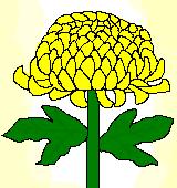黄色いキクのイラスト