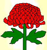 赤いキクのイラスト