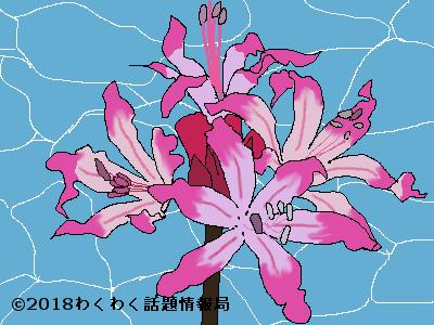 ネリネのイラスト