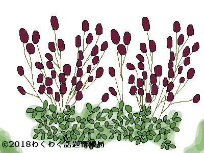 ワレモコウの画像 p1_34