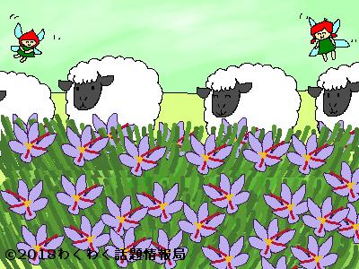 羊たちとサフランのベッドのイラスト