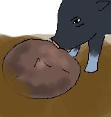 シクラメンの球根と豚のイラスト