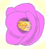 ピンクのツバキのイラスト