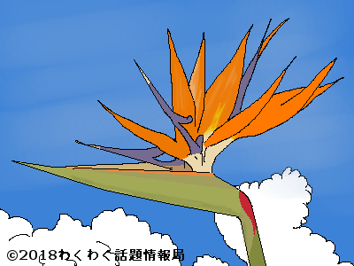 ストレリチアのイラスト