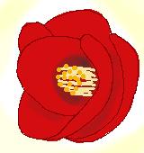 赤いツバキのイラスト
