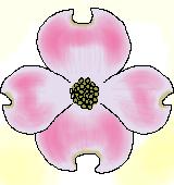 ハナミズキの花のイラスト