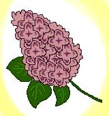 紫のライラックのイラスト