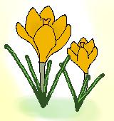 黄色いクロッカスのイラスト