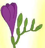 紫のフリージアのイラスト
