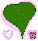 ライラックの葉と花のイラスト