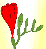 赤いフリージアのイラスト